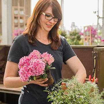 Blumen, Hopf, Gärtnerei, Pflanzen, Schöllnach, Blumenstrauß
